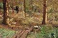 Balgownie Wood - geograph.org.uk - 285266.jpg