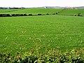 Ballymoney Townland - geograph.org.uk - 802050.jpg