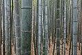 Bamboo Forest, Arashiyama, Kyoto, Japan.jpg