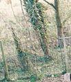 Banbury, Hardwick 2000 (1).jpg