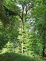 Baum - panoramio (4).jpg
