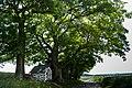 Baumgruppe am Saynecker Weg.jpg