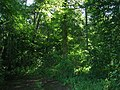 Beacon Wood - geograph.org.uk - 1413994.jpg