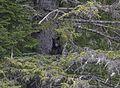Bear 2 tree 119.jpg