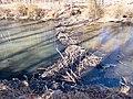 Beaver Dam on Chesapeake and Ohio Canal.jpg