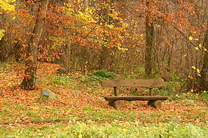 Bench forest, Heidelberg.JPG