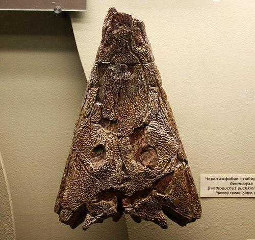 Benthosuchus