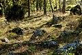 Bergslagssafari 120915 Järnåldersgrav Stora Dicka 02.jpg
