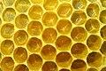 Bienenwabe mit Eiern 35a.jpg