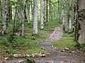 Biogradska gora - National Park, the oldest protected natural resource in Montenegro 07.jpg