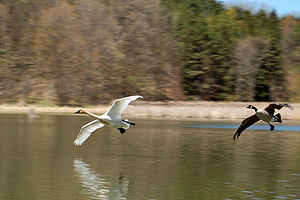 Kortright Centre for Conservation - Image: Bird Chase