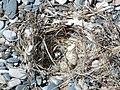 Bird nest beach Rhodos 12.JPG