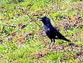 Birds Prešov16Slovakia4.JPG