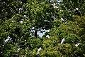 Birds on Monkey Island.jpg