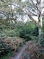 Blackbrook Wood - geograph.org.uk - 1471831.jpg