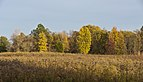 Blacklick Woods-Meadows in the Fall 1.jpg