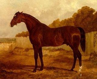 Blacklock (horse) British-bred Thoroughbred racehorse