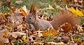 Blending with leaves (49227501272).jpg