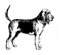 Bloodhound (PSF).png