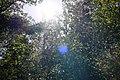 Bois des Glaisins (51195772181).jpg