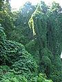 Botanic garden,Georgia (1).jpg