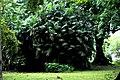 Botanic garden limbe153.jpg