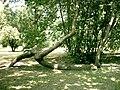 Botanical garden in Poznań7.JPG