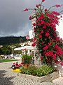 Bougainvillea, town square, Monchique.jpg
