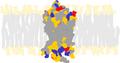 Bovine rhodopsin.png