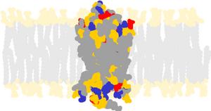 Rhodopsin - Bovine rhodopsin