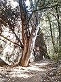 Boynton Canyon Trail, Sedona, Arizona - panoramio (114).jpg