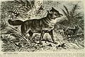 Brehm's Life of animals - a complete natural history for popular home instruction and for the use of schools (1895) (20226166889).jpg