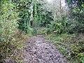 Bridleway, Hanging Langford - geograph.org.uk - 1058466.jpg