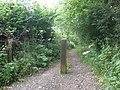 Bridleway, on Beacon Hill - geograph.org.uk - 1371189.jpg