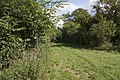 Bridleway leading to Cox Lane - geograph.org.uk - 548210.jpg