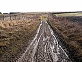 Bridleway near Brocolitia - geograph.org.uk - 1119929.jpg