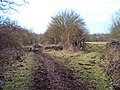Bridleway near Strelley Park Farm - geograph.org.uk - 1771214.jpg