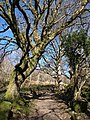 Bridleway on Lustleigh Cleave - geograph.org.uk - 1762506.jpg