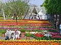 Britzer Garten - Tulipan 2013 - geo.hlipp.de - 36172.jpg