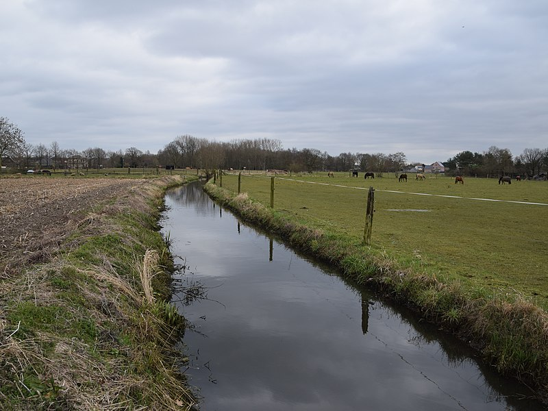 Bruinbeek