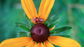 Bug on flower (6083353997).png