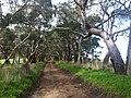 Bugle Ranges SA 5251, Australia - panoramio.jpg