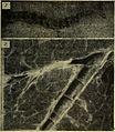 Bulletin du Muséum d'histoire naturelle (1921) (14594637659).jpg