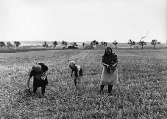 Gleaning - Impoverished Germans gleaning in 1956