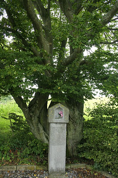 Bure (Belgium): the little votive chapel dedicated to Our Lady of the Fields and its remarkable old hornbeam.