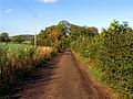 Byway near Ramsworth Cottages - geograph.org.uk - 71392.jpg