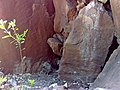 California condor chick -871 is seen via nest camera. (34828232042).jpg