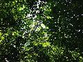 Cardiff Woods Park (29126310301).jpg