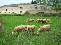 Carrión de los Condes - Inmediaciones del Monasterio de San Zoilo 2.jpg