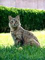Cat Iran.jpg